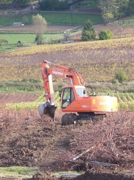 Arrachage des vieilles vignes